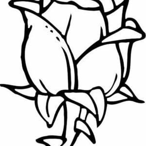 Rose Flower For Beautiful Lady Coloring Page