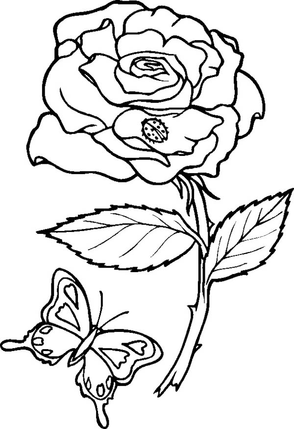Rose and Butterfly Coloring Page Rose and Butterfly Coloring Page