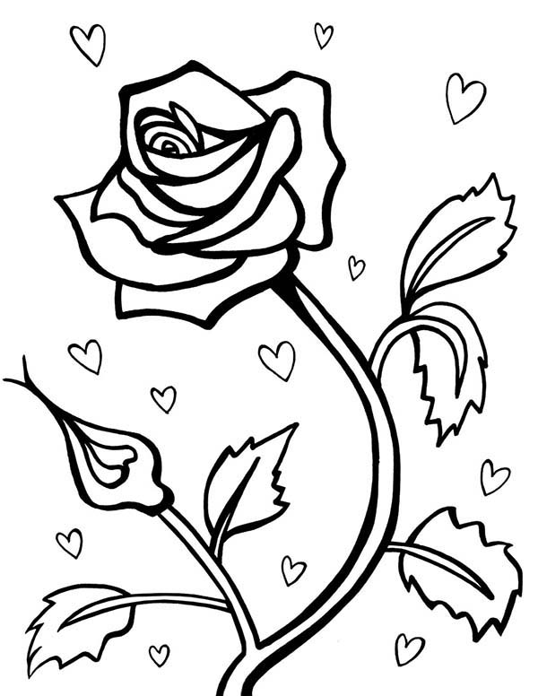 rose for valentine day coloring page - Valentines Day Coloring Pages