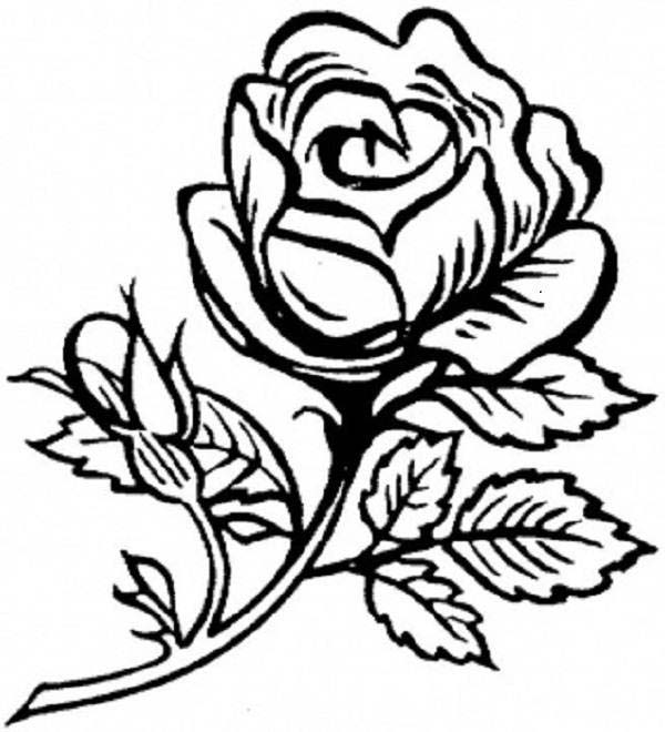 rose is beautiful flower coloring page - Flowers To Print And Color