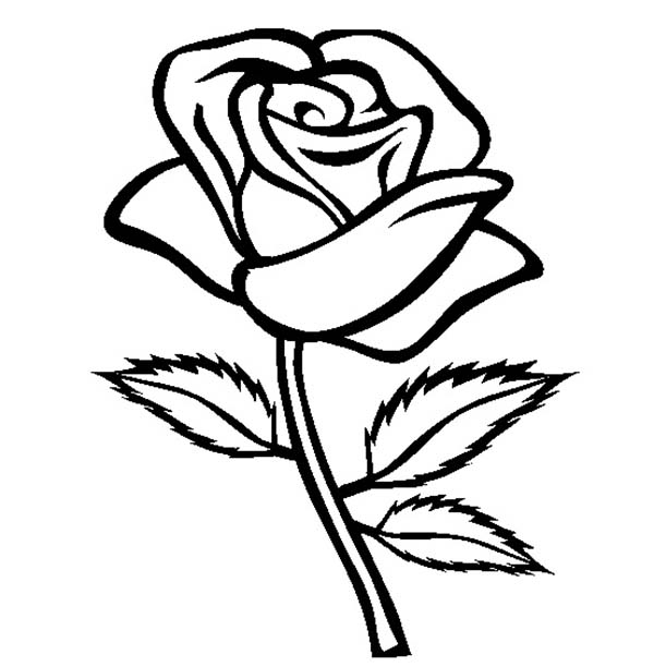Rose With Three Leaves Coloring Page