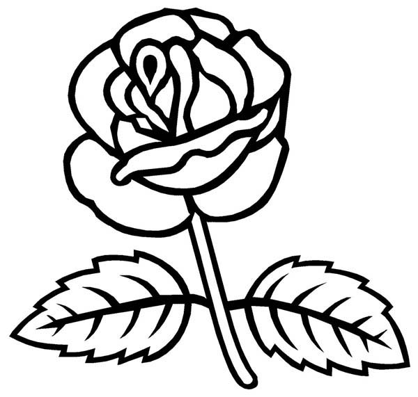 Rose with Two Leaves Coloring Page: Rose with Two Leaves Coloring ...