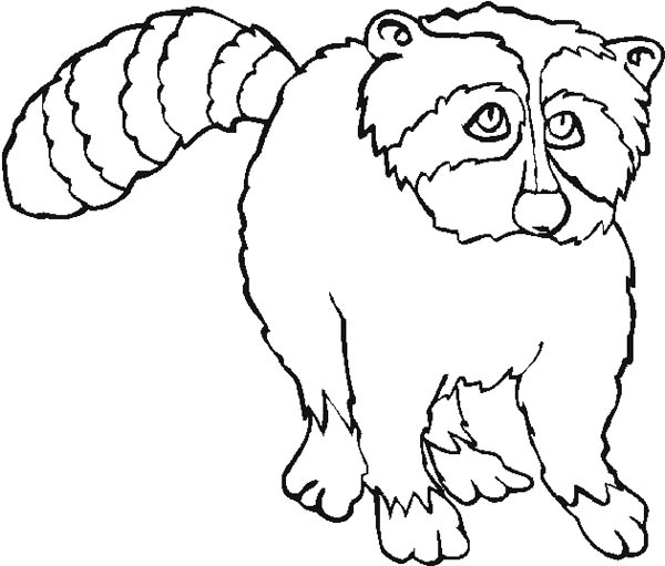 sad raccoon coloring page - Racoon Coloring Page