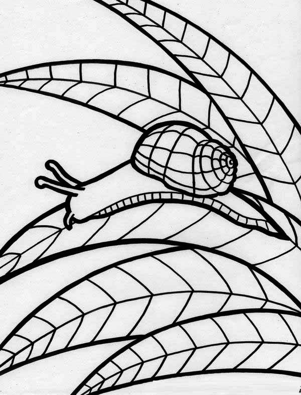 Snail Rainforest Animals Coloring Page  Download  Print Online