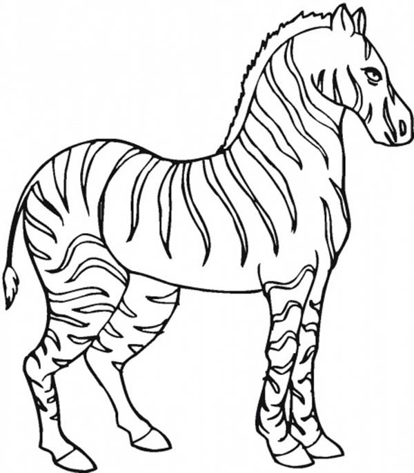 stallion zebra coloring page - Zebra Coloring Pages