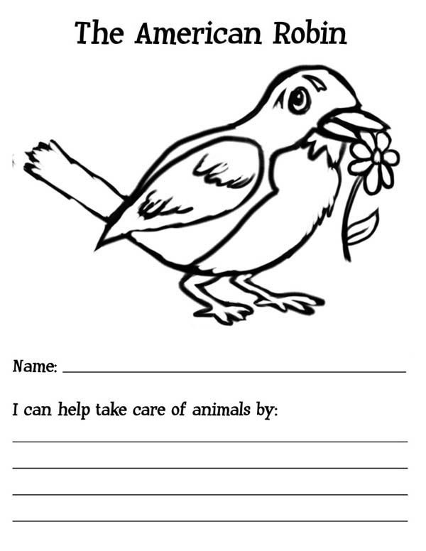 The American Robin Bird Coloring Page Download Print Online