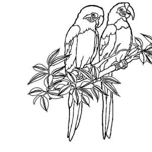two rainforest bird coloring page
