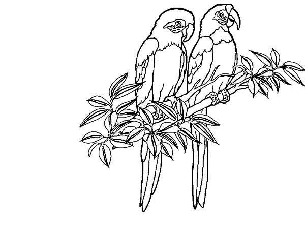 two rainforest bird coloring page: two rainforest bird coloring ... - Rainforest Insects Coloring Pages