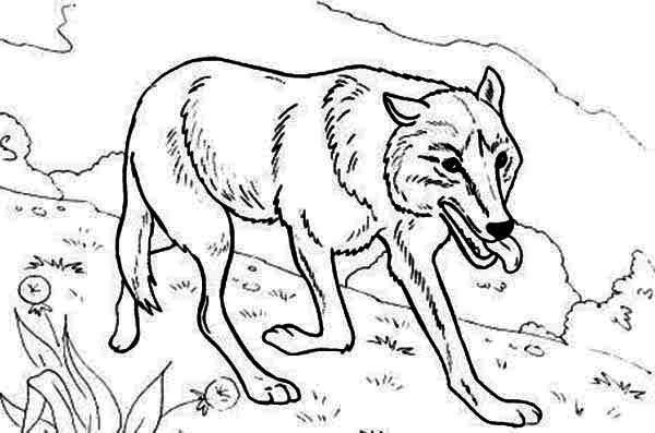 Wolf Hunting for Food Coloring Page Download Print Online