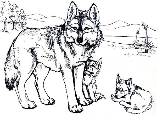 Wolf Mother and Her Cubs Coloring Page Download Print Online