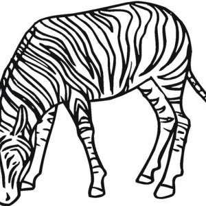 Zebra Eating Grass Coloring Page
