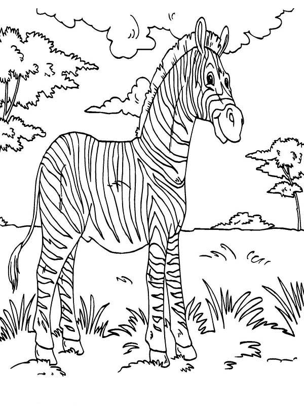 zebra rainforest animals coloring page - Pictures Of Rainforest Animals To Color