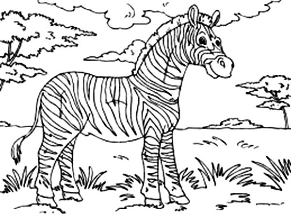 online for kid zebra coloring page 37 with additional coloring