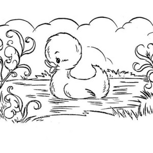 Beautiful Picture Of Duckling Swim Coloring Page