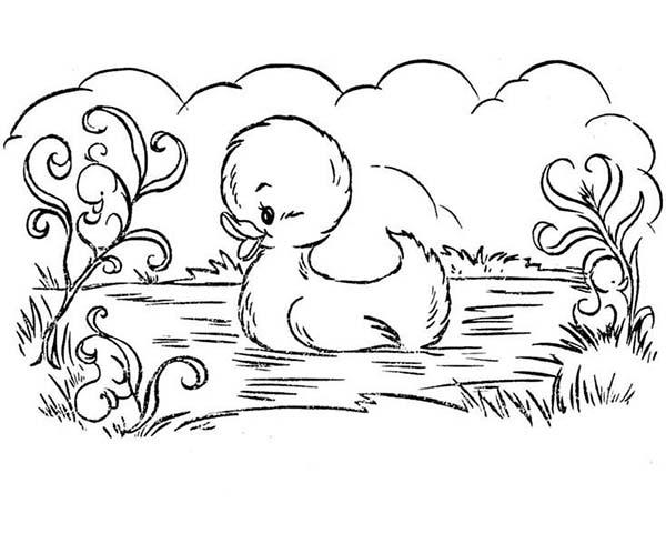 Duckling coloring