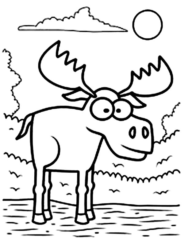 Big Eyed Moose Coloring Page
