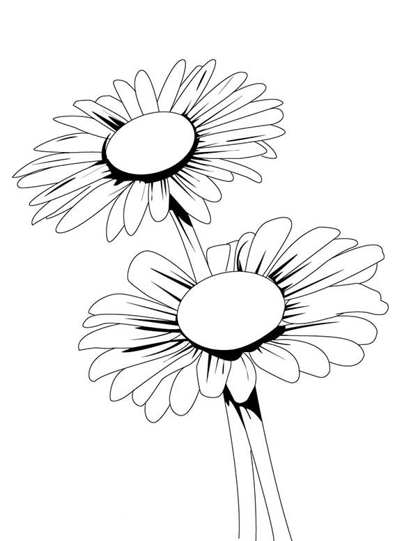 Nice Blooming Daisy Flower Coloring Page