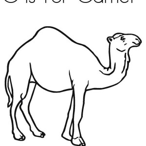 Camels free colouring pages for Camel coloring page