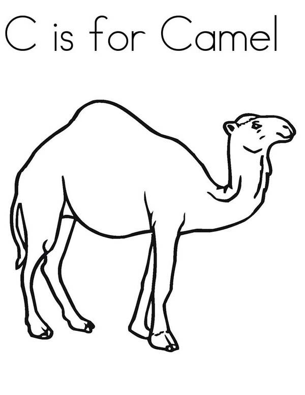 C is for Camel Coloring Page - Download & Print Online Coloring ...