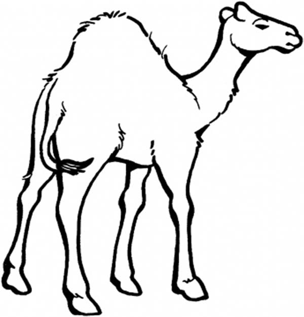Camel Coloring Page for Kids Download Print Online Coloring