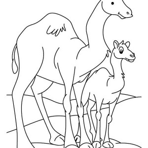 Camel and Baby Camel Coloring Page