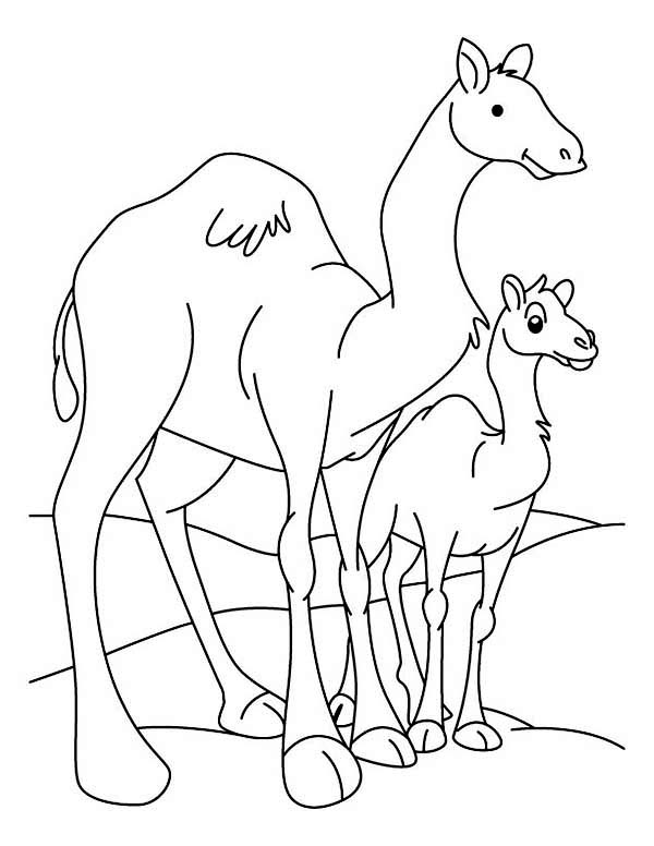 Camel And Baby Coloring Page