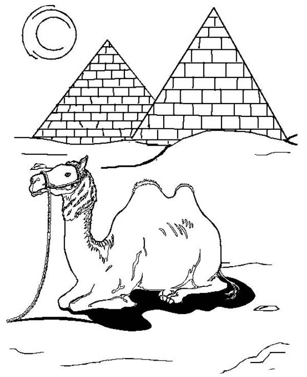 camels coloring pages - camel in egypt coloring page download print online