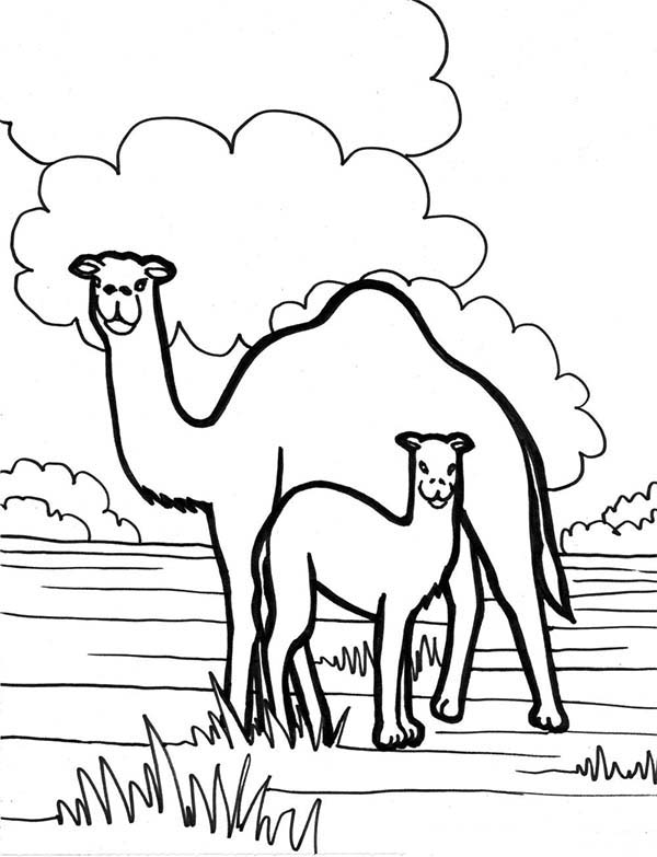 Camel In The Meadow Coloring Page Download Print Online
