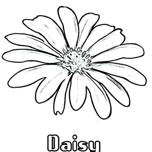 How to Draw Daisy Flower Coloring Page How to Draw Daisy Flower