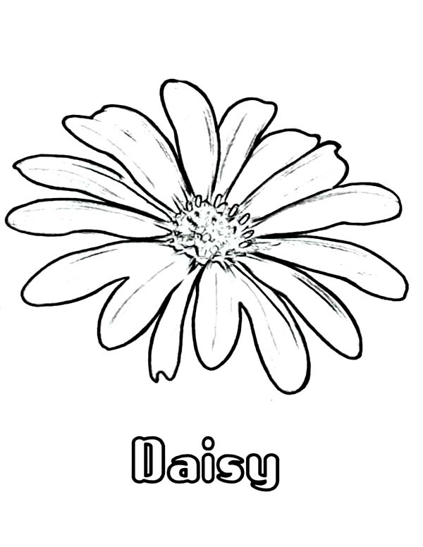 Daisy flower coloring page for kids daisy flower coloring for Daisy coloring page
