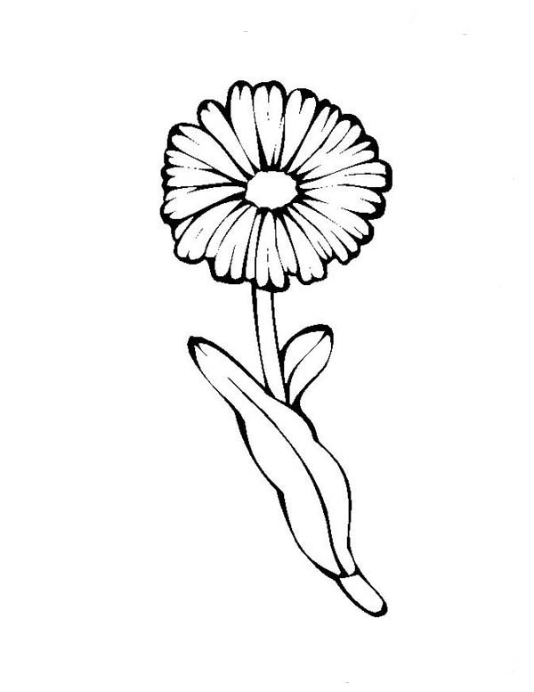 Daisy Flower Coloring Page
