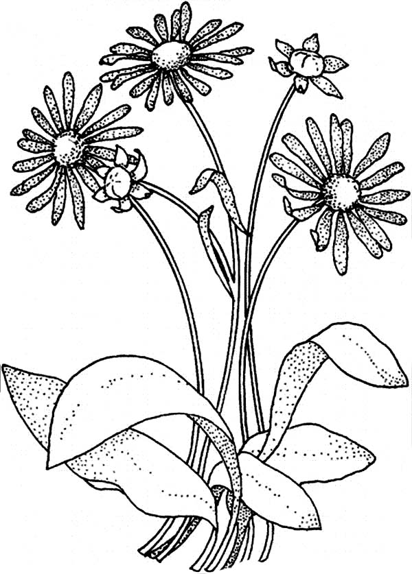 Coloring Pages Of Daisy Flowers Coloring Pages