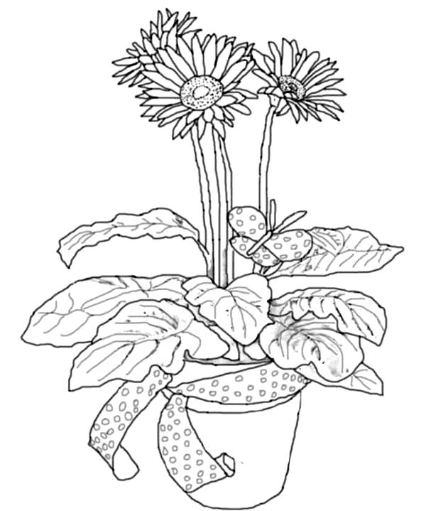 Daisy Flower in Pottery Coloring Page Daisy Flower in Pottery