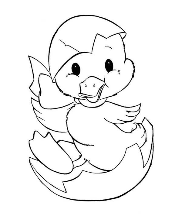 Duckling Just Hatching from Egg Coloring Page Download Print