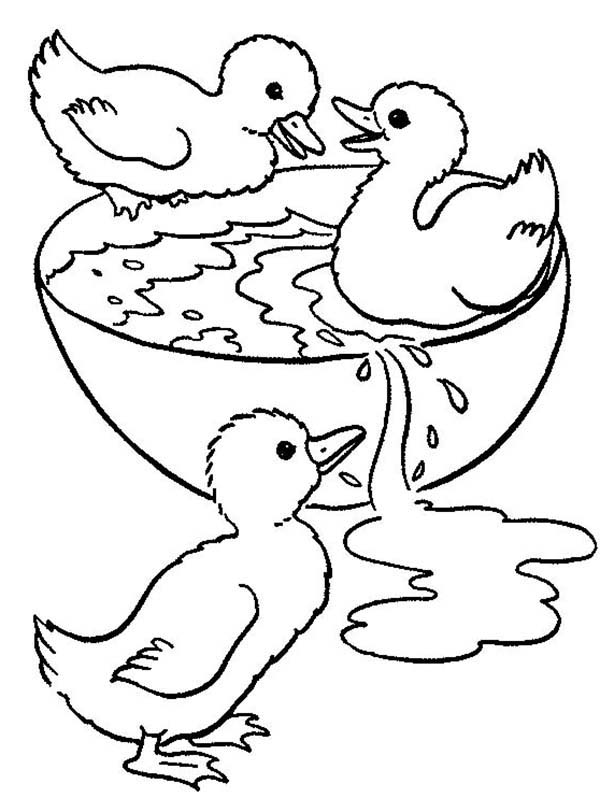 The gallery for ducklings coloring pages for Duckling coloring pages
