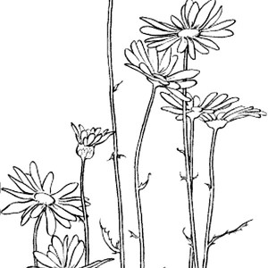 Cartoon of Angry Daisy Flower Coloring Page Cartoon of Angry