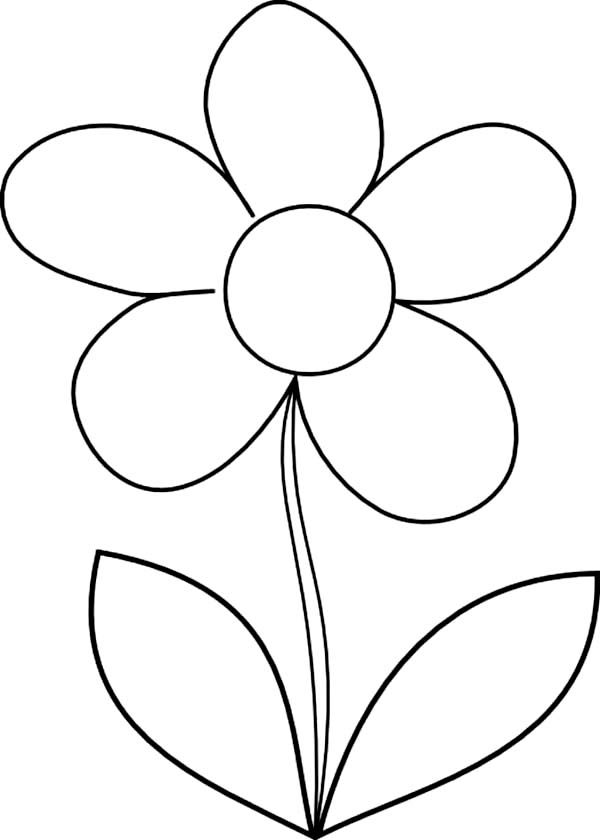 daisy flower how to draw daisy flower coloring page - How To Draw Coloring Pages