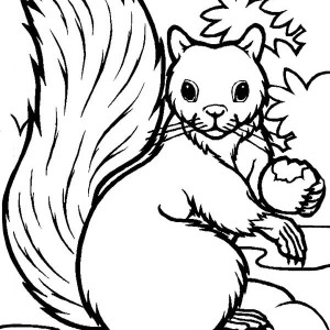 hungry squirrel eating coloring page