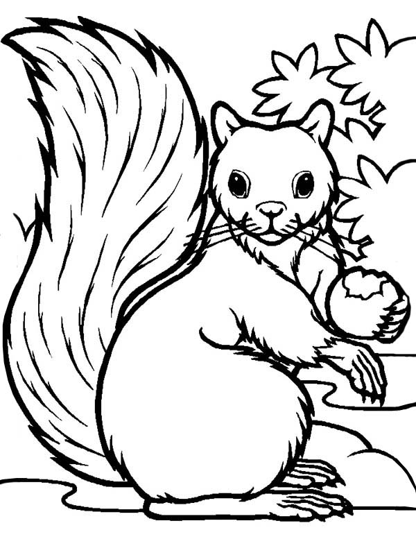 Hungry squirrel eating coloring page download print for Coloring page of a squirrel