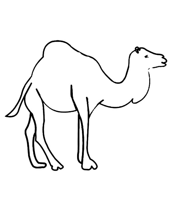 Kids Drawing of Camel Coloring Page - Download & Print Online ...