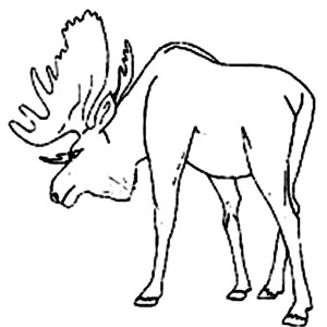 Moose Defending His Territory Coloring Page