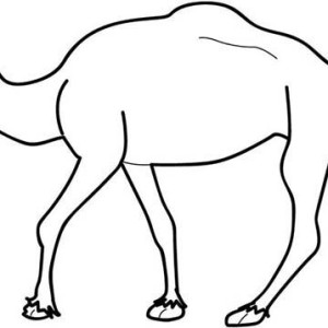 Camel and Baby Camel Coloring Page Camel and Baby Camel Coloring