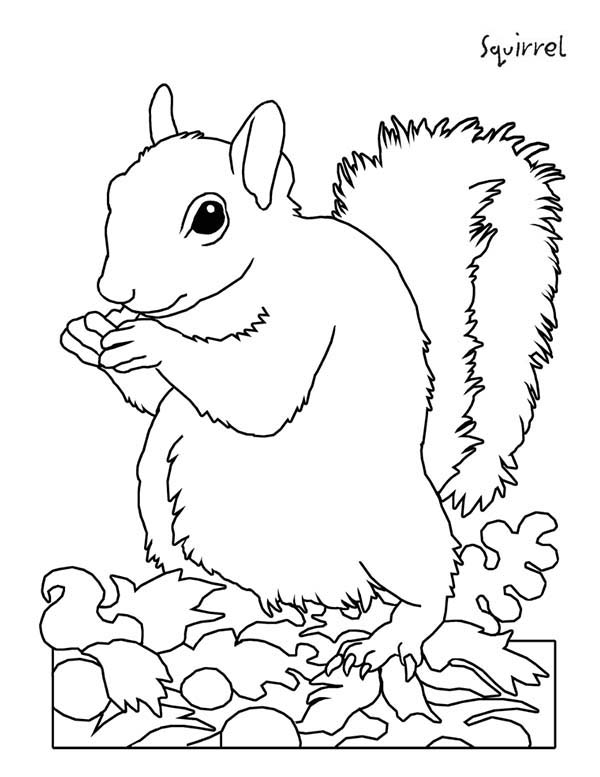 squirrel color page - picture of squirrel coloring page download print