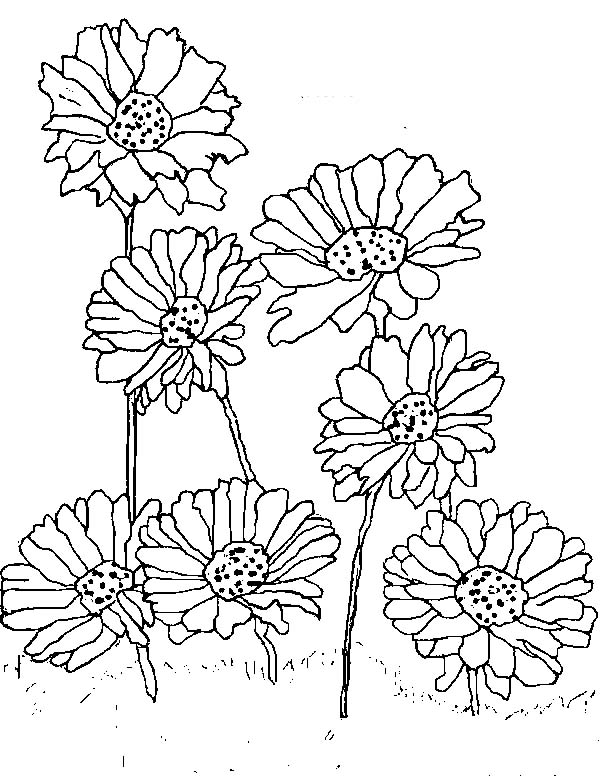 planting daisy flower coloring page  download  print online, Beautiful flower