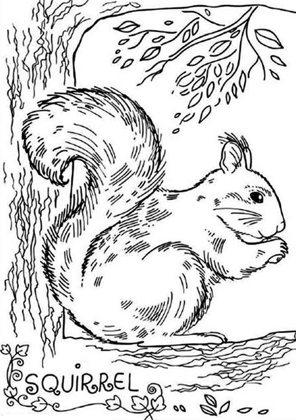 Realistic picture of squirrel coloring page download for Coloring page of a squirrel