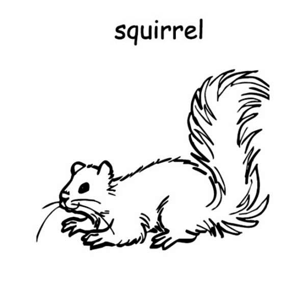 two baby squirrel coloring page