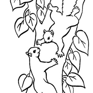 Squirrel Climbing Tree Coloring Page