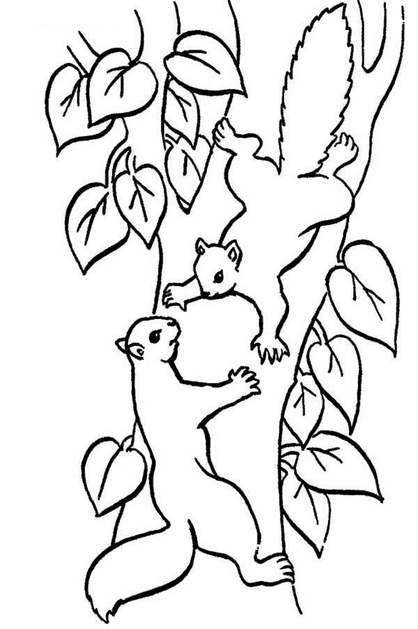 Squirrel Climbing Tree Coloring Page Squirrel Climbing