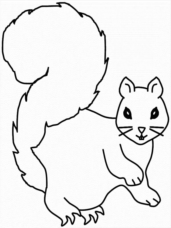 Squirrel coloring page for kids squirrel coloring page for Printable coloring pages of squirrels