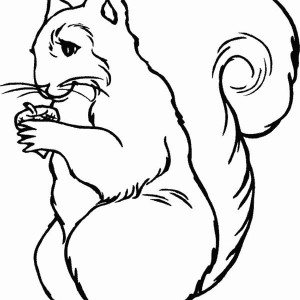 Squirrel Look Very Sad Coloring Page